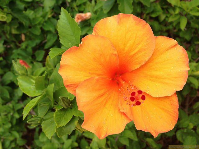 Hawaii vacation deals & news: January 4, 2016 | Go Visit Hawaii