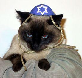 14 Best Jew Ish Animals Images