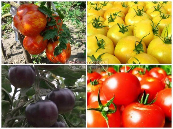 Лучшие сорта помидор для теплицы: фото и советы