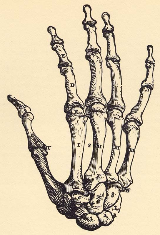 Image result for hand skeleton reference