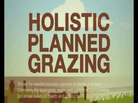 Savory Institute - Holistic Planned Grazing - a  minute video on what is occurring in world-wide grasslands and the importance of creating a symbiotic relationship between domestic livestock and the land.
