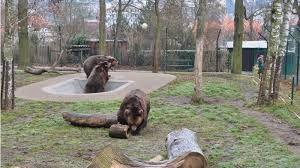 Výsledek obrázku pro vojta kuba matěj medvědi