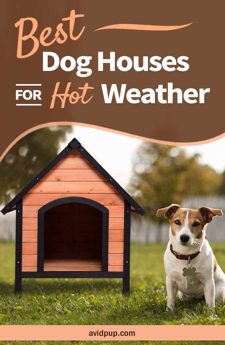 Top 5 Best Dog Houses For Hot Weather Summer Warm Climates