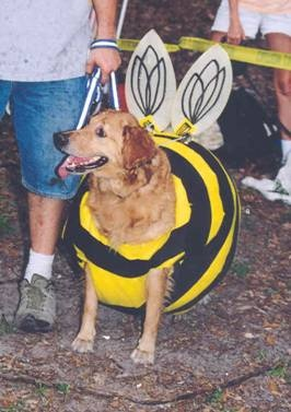 a website about dogs dressed like bees