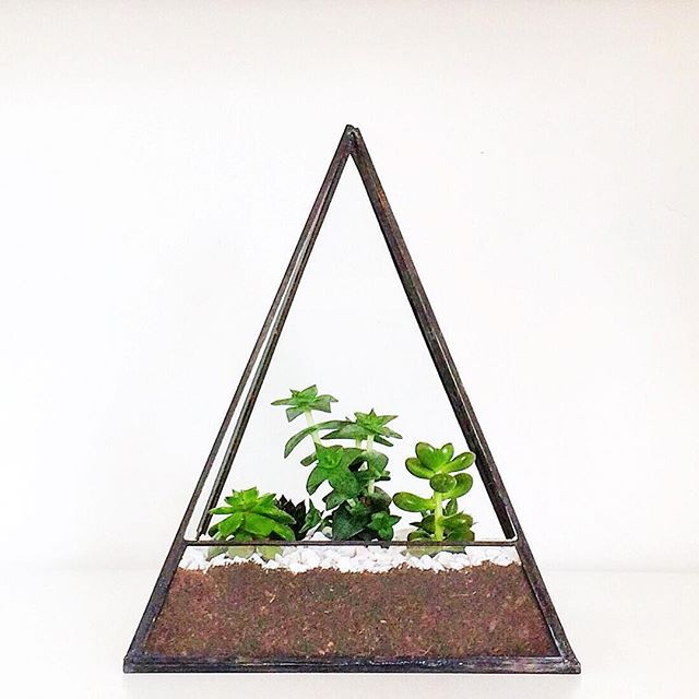 The large black pyramid has officially overtaken the large black cube in popularity. All hail the pyramid! 🔼  #terrarium #succulents #aloes #pyramid #houseplants #homedecor #growsomethinggreen #glass #artisan #handmade #unique #gift #photographic #theglassgardener