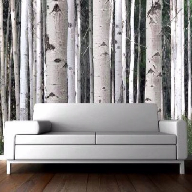 Wallpaper mural white trees home remodel pinterest for Brewster birch wall mural