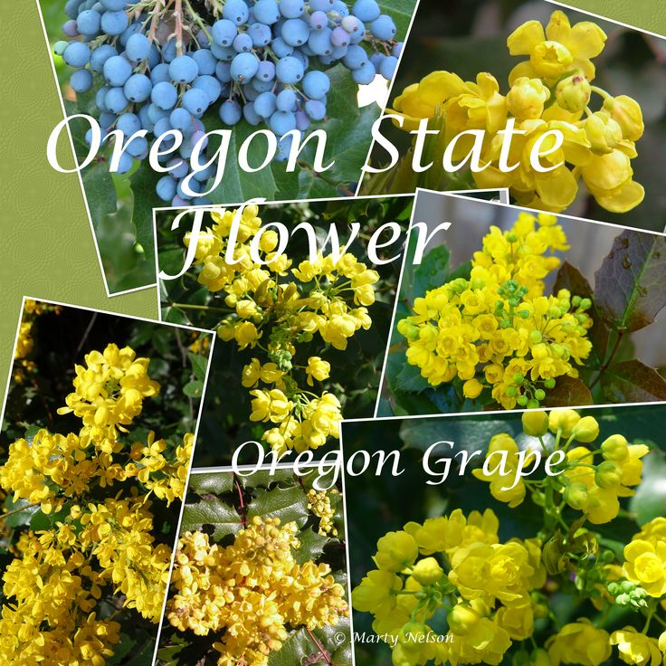 137 best marty 39 s wildflower collection images on pinterest for Oregon craft floral