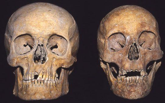 an introduction to the comparison of human and apes 2008-10-15 human evolution objectives: • describe, measure and compare cranial casts from contemporary apes  the nuchal crest.