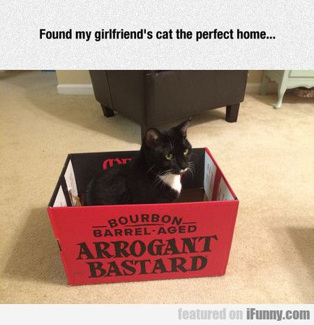 Found My Girlfriend's Cat The Perfect Home...