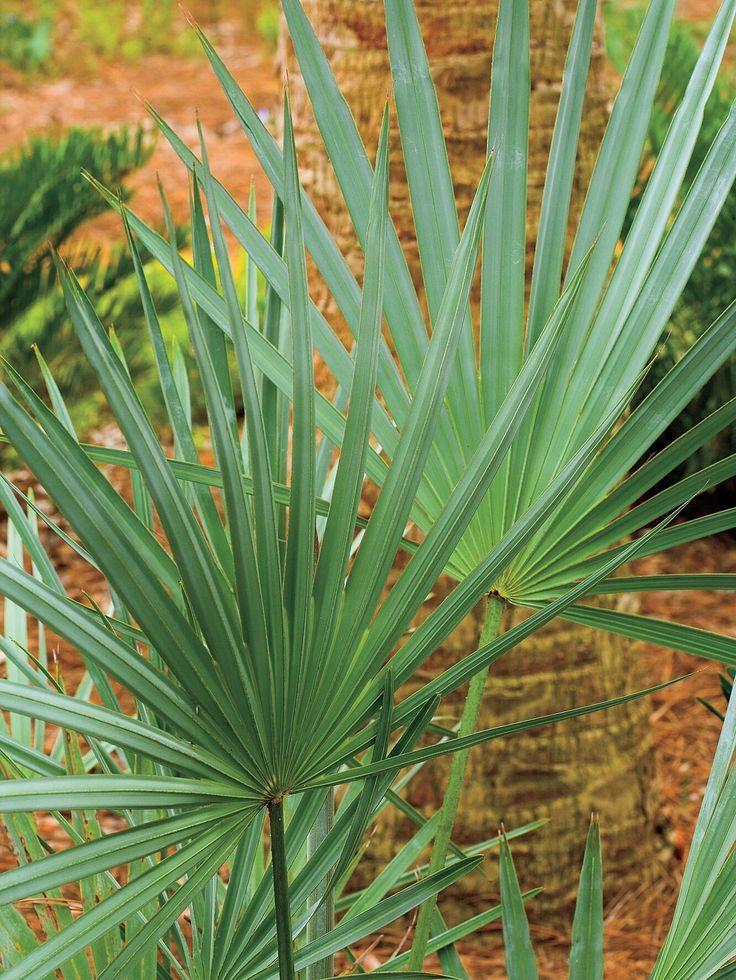 10 DroughtTolerant Native Plants in 2020 Florida native