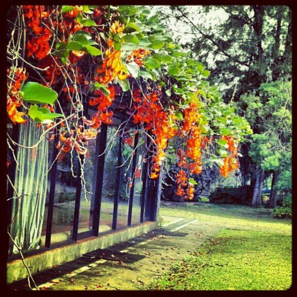 Wildflower - Lembang - Bandung - Indonesia