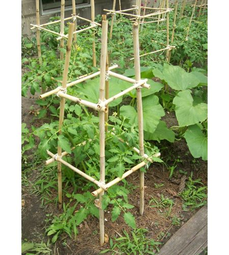 Homemade Bamboo Tomato Cages. Heirlooms grow so big and wild and so often the metal cages are way too small! This would be ideal.