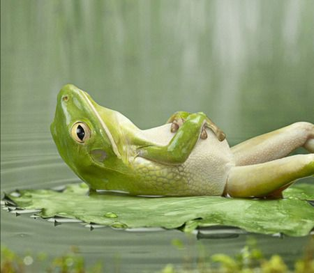 cute frogs - Google SearchLife, Lazy Day, Green, Daily Affirmations, Funny, Paz Interiors, Inner Peace, Spanish Quotes, Frogs