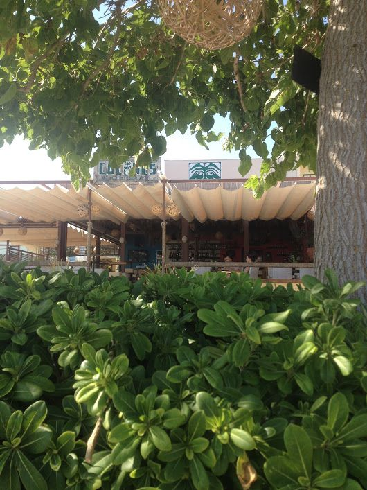 Welcome to the jungle!  Cocones Beach Bar Polichrono Chalkidiki RSV. 2374 052...