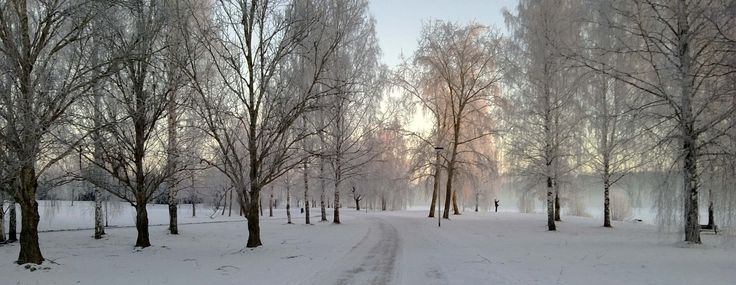 Winter path. STarnanen 2014.