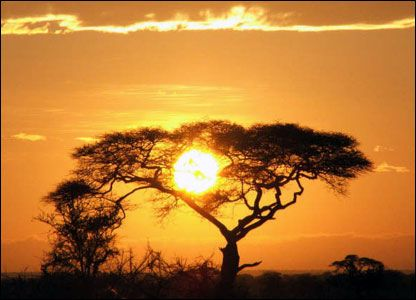 Serengeti Park, Tanzania-places to go: African Serengeti, Favorite Places, Tree, Places I D, Travel, Africa Sunrise, Africans