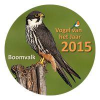 De boomvalk werd door u verkozen tot Vogel van het Jaar 2015.