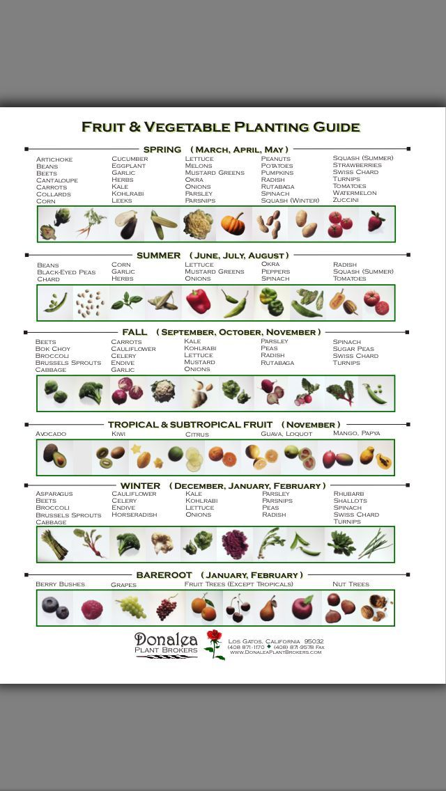 Vegetable garden planting guide.