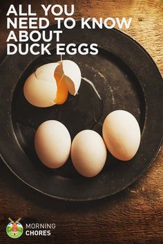 All You Need to Know About Duck Eggs — Nutrition, Benefits, Raising Ducks, and Hatching Duck Eggs