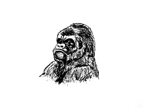 ©®eªRtEmUndOs: Gorilla