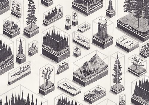 stimadidanno:  (via 'Forest' and Other Interpretations of Nature by Jamie Mills: SOCKS)