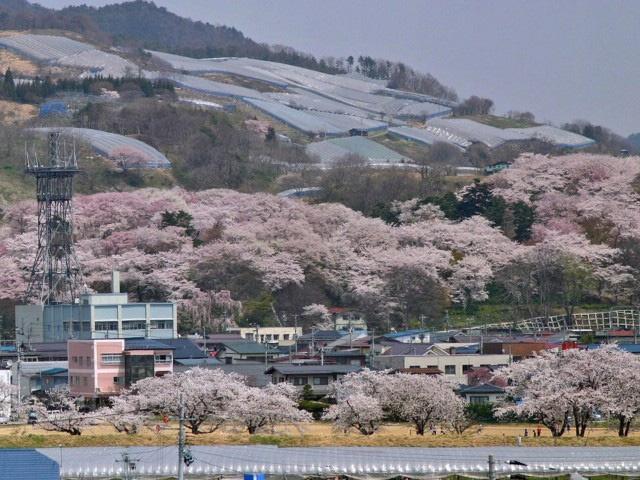 Early spring - Eboshiyama park, Akayu, Yamagata 烏帽子山公園(山形県南陽市)