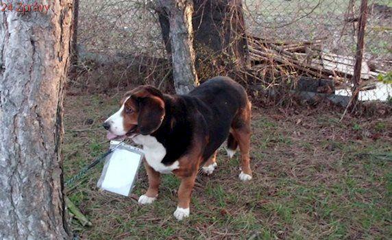 Opuštěný pes měl cedulku se vzkazem, jídlo mu však majitel nenechal