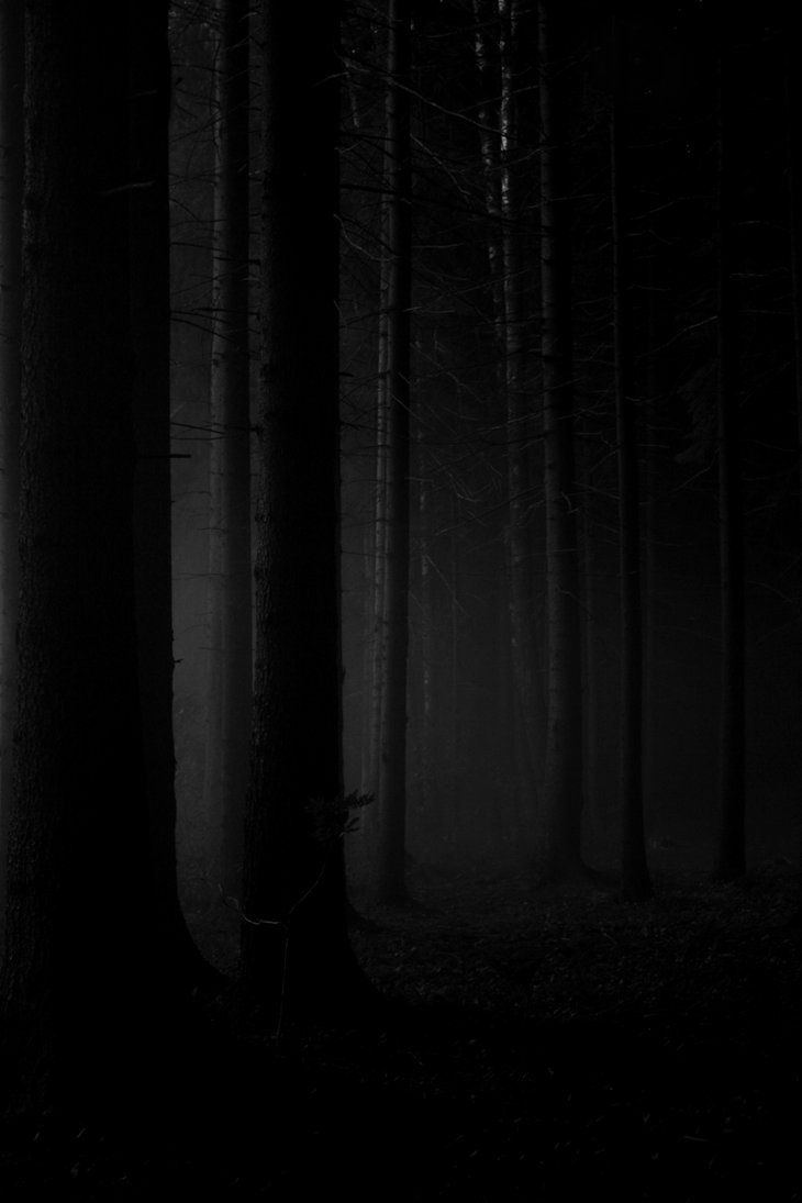 ☾ Midnight Dreams ☽ dreamy & dramatic black and white photography - Phantom Forest by Husvik