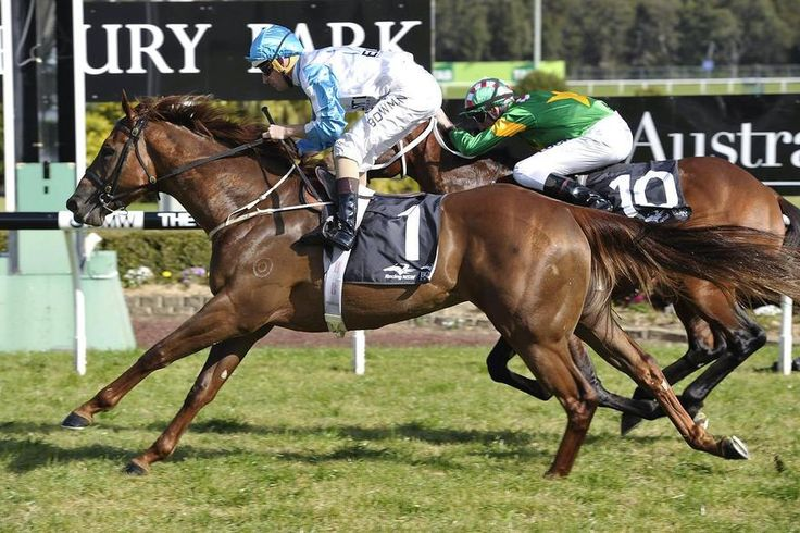 Sebring Sun Ready To Shine For Portelli