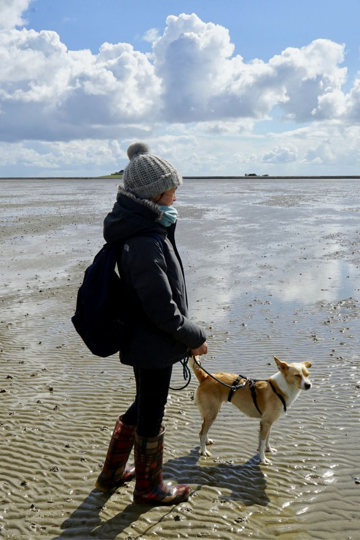 Tage Im Meer Mit Kind Und Hund Unterwegs Auf Langeness Hund Unterwegs Kurztrip Wochenende Und Reisen Deutschland