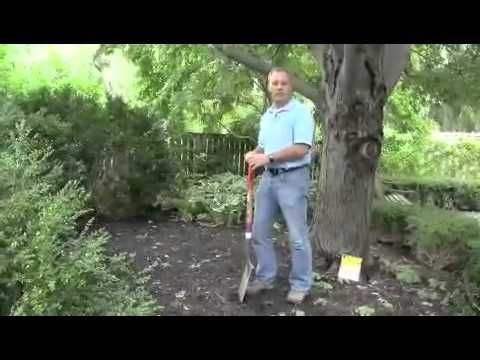 Fall Bulb Planting Tips from Chicago Botanic Garden
