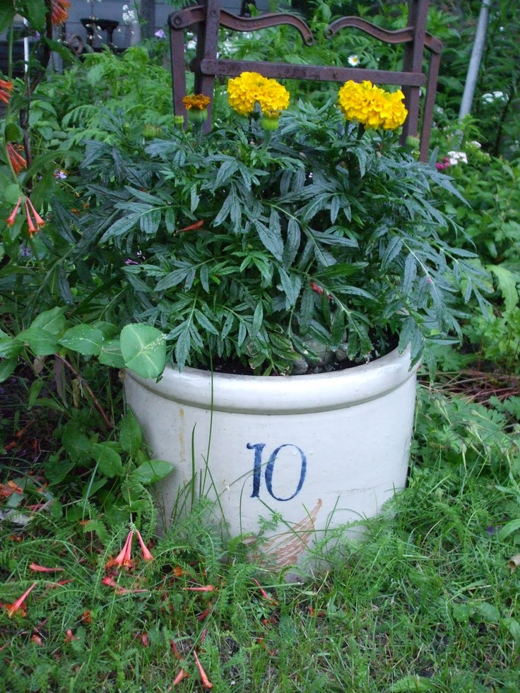 Love this 10 gallon crock used as a planter.  It looks like it is sort of buried in the ground too:)