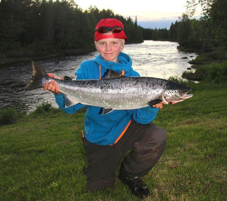 Lohen kalastus Pellossa Tornion joella: koko perheen aktiviteetti