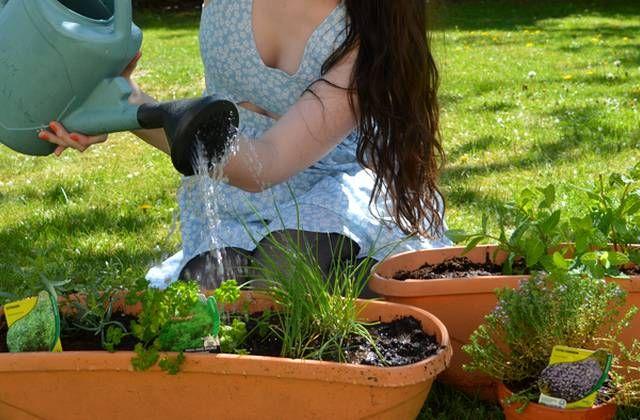 Les plantes aromatiques, une façon simple et économique de garder ciboulette, menthe ou encore persil à portée de main !