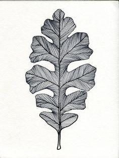 english oak leaf drawing
