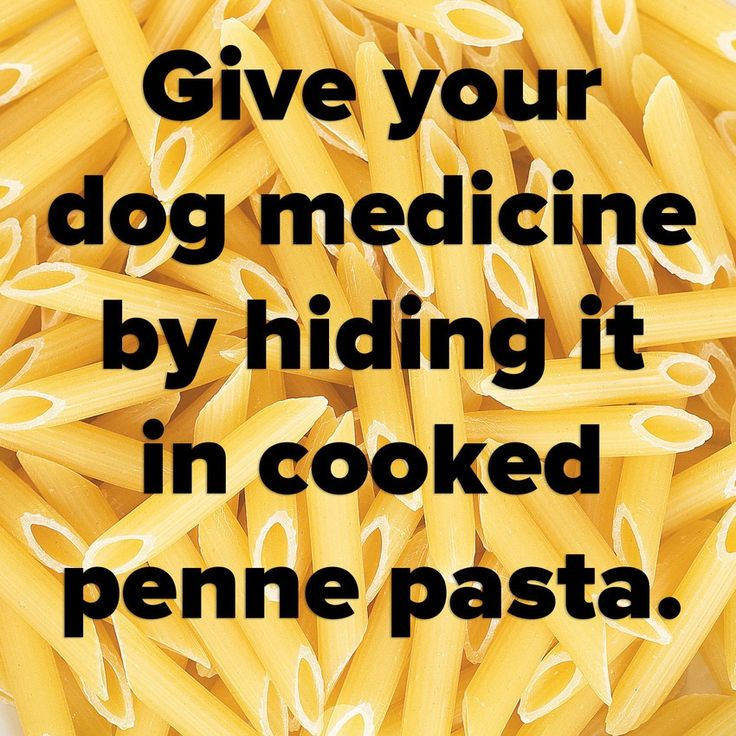 Try slipping your dog's pills into a piece of penne pasta  to prevent them from spitting them out