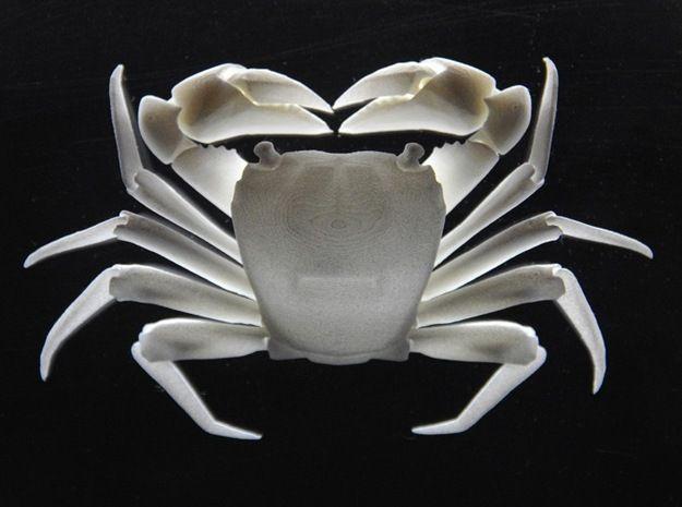 Articulated Crab (Pachygrapsus crassipes) by chosetec