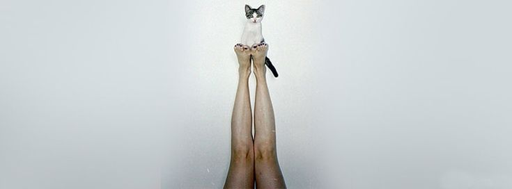 cute cat facebook timeline cover
