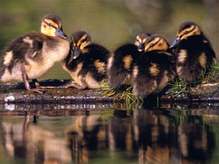 Bird Sanctuaries in Maharashtra, India @ Sanctuariesindia.com