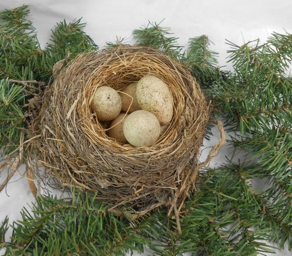 Natural bird nest with eggs Small Natural Birds Nest Abandon