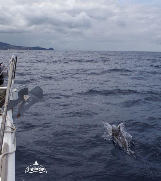 Sailing around Capo d'Orlando with dolphins. In Sicily..... Navigando verso il Capo d'Orlando con delfini. In Sicilia....