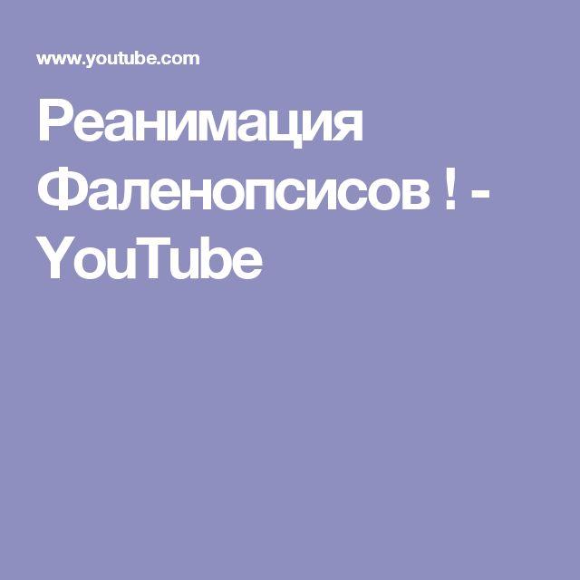 Реанимация Фаленопсисов ! - YouTube
