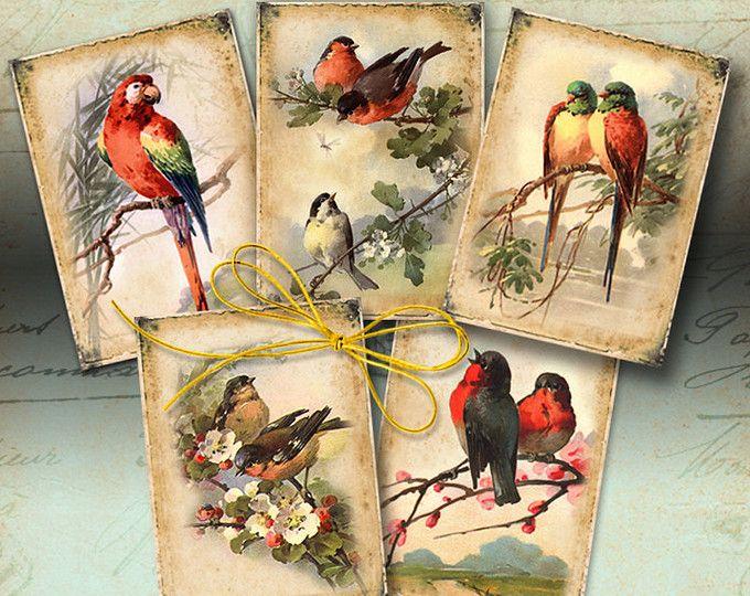 Para imprimir descargar regalo efímero aves clave Digital Collage hoja 2.5x3.5 pulgadas Tamaño imágenes vintage scrapbooking papel tarjetas de felicitación ArtCult
