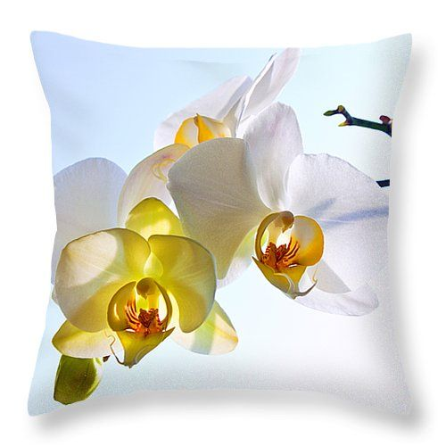 ORCHID WITH SKY BACKGROUND by VICTOR KOVCHIN.   Belong to the Galery Russian Artists New Wave  Elegant and beautiful white orchid against the light blue sky. #RussianArtistsNewWave #Orchid #FlowerArt #VictorKovchin #WhiteOrchid #Garden#Flowers #White #InteriorDesign #HomeDecor #Canvas #FramedPrints #AcrylicPrints #FloralDesign #Tropical #Cushion #Pillow