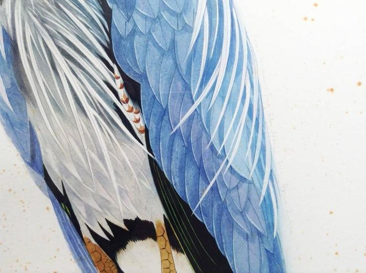Great Blue Heron, facing left 4