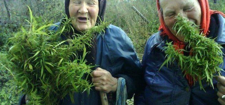 Older Ladies Who Enjoy Getting High