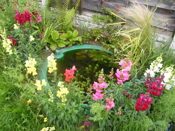 34 best images about wildlife pond ideas on pinterest for Recommended pond plants