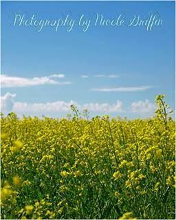 Canola crop. Saskatchewan.  Photography by Nicole Griffin