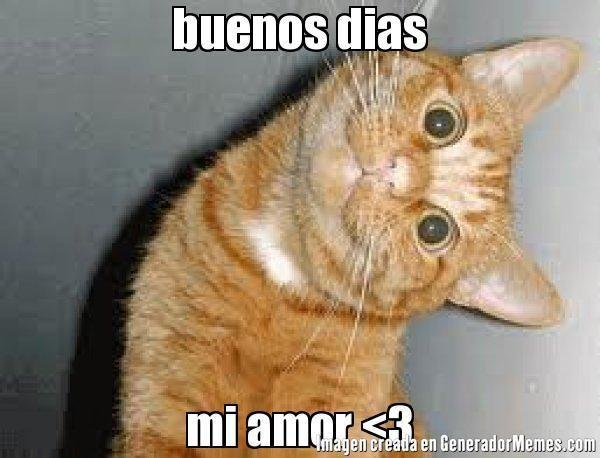 Memes Buenos Dias Amor 12 Gatos Bonitos Gatos Tontos Collares Para Gatos