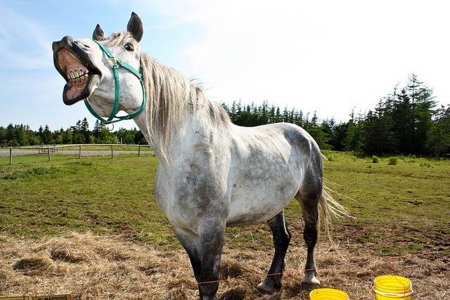 A happy horse from Two Rivers Wildlife Park in Cape Breton, Nova Scotia.
